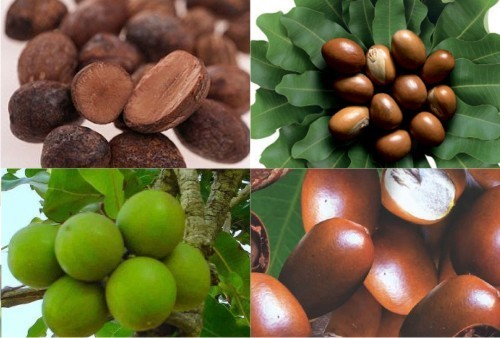 乳木果油整理剂HANS® PERF- RUMO